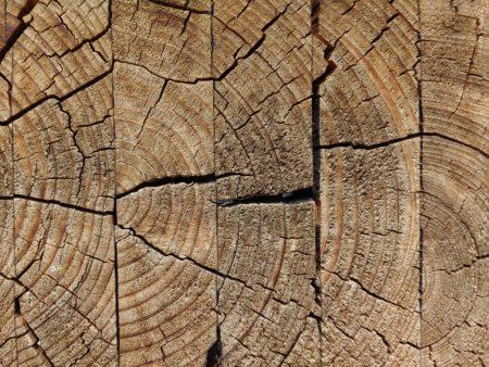 Пороки и дефекты древесины
